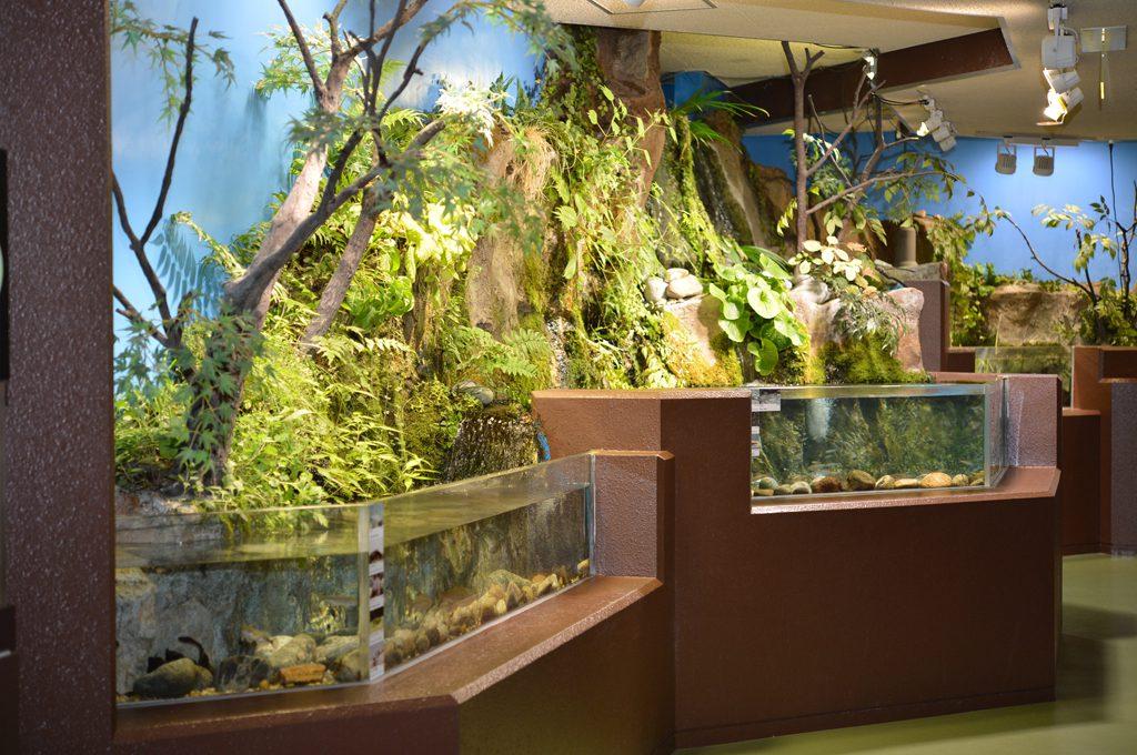 富山の河川コーナー/魚津水族館(富山県魚津市)