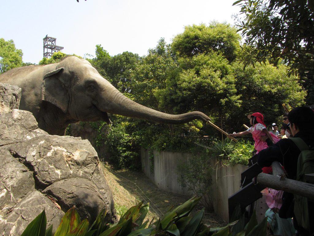 ゾウにエサやり体験できる/到津の森公園(福岡県北九州市)