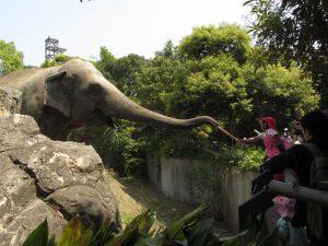 到津の森公園(北九州市)は、ゾウのエサやりなど動物とのふれあい体験が人気!