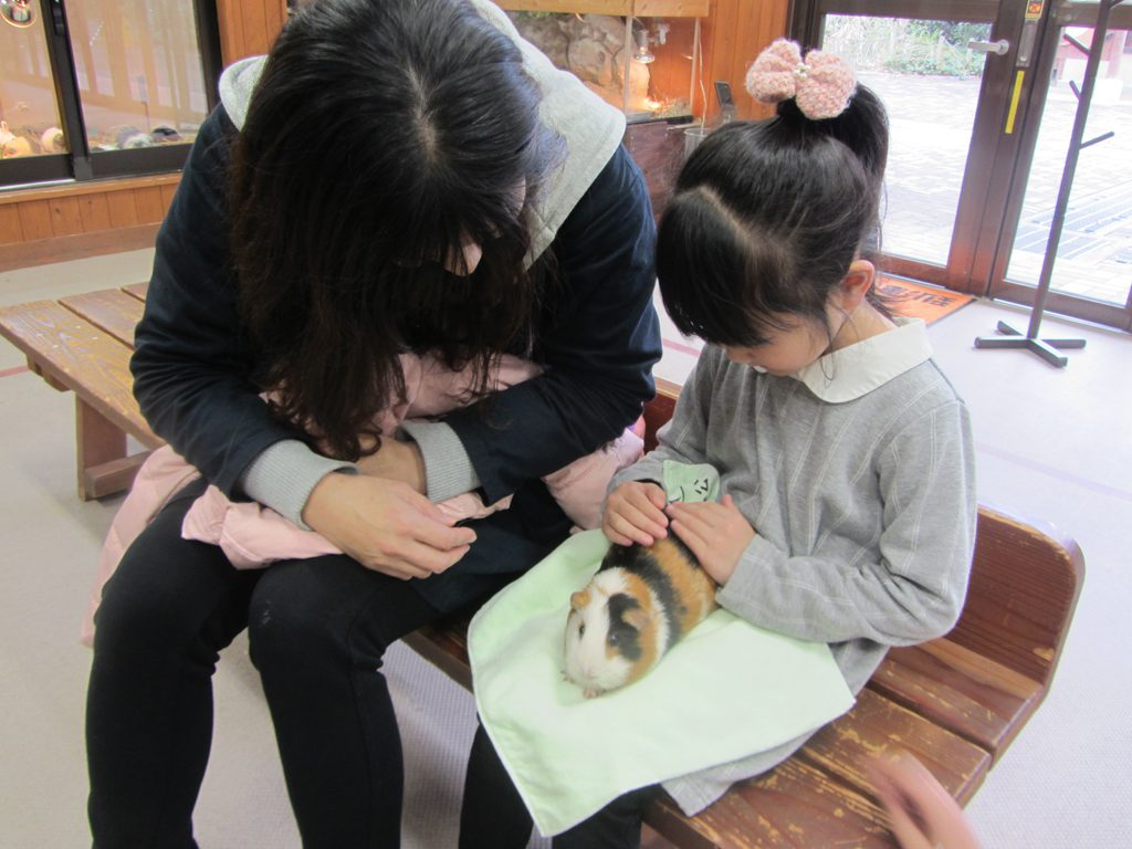 ふれあい動物園でモルモットを抱っこ/到津の森公園(福岡県北九州市)