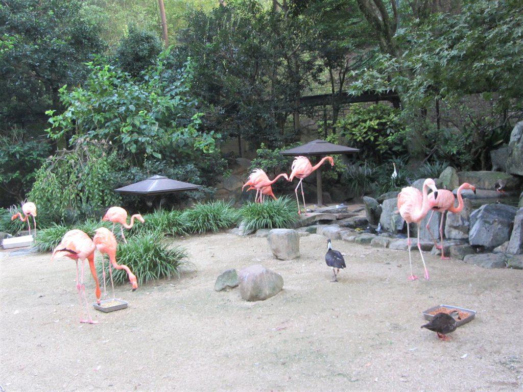ベニイロフラミンゴなどを間近で観察/到津の森公園(福岡県北九州市)