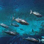 体験プログラム満載の楽しい水族館!アクアマリンふくしまの見所は?
