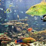 水族館でウミガメとふれあい、海中観光船から熱帯魚を眺める「串本海中公園」