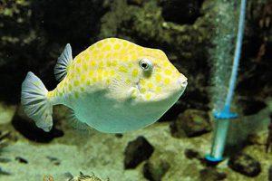 下関市立しものせき水族館「海響館」は下関の海にこだわったユニークな水族館