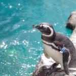 上越市立水族博物館 うみがたりは、日本海にこだわった新しい水族館!