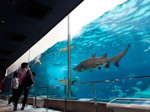 カピバラと足湯?! 須磨海浜水族園(神戸)はエサやりやショーなど楽しい体験が満載