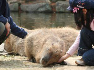 動物たちと遊んで、学んでふれ合おう!長崎バイオパークの魅力を紹介