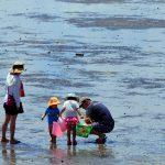 三河湾のアサリやマテ貝…愛知県の潮干狩り場2019(蒲郡・西尾・知多ほか)