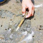潮干狩りのコツ!アサリ・ハマグリ・バカ貝・マテ貝の上手な採り方・持ち帰り方