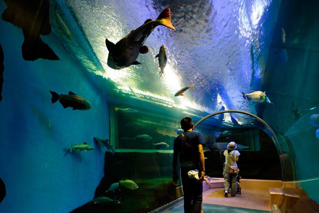 チューブ型水中トンネル/須磨海浜水族園(兵庫県神戸市)