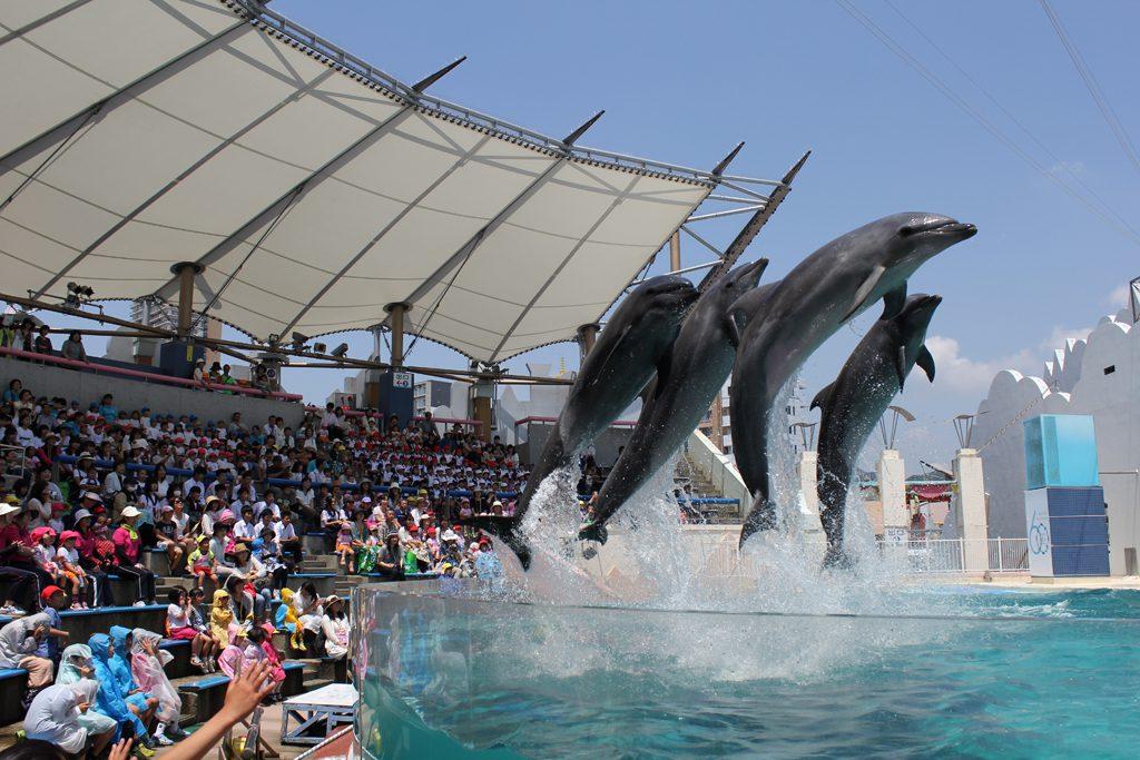 イルカショーでイルカたちがジャンプ/須磨海浜水族園(兵庫県神戸市)