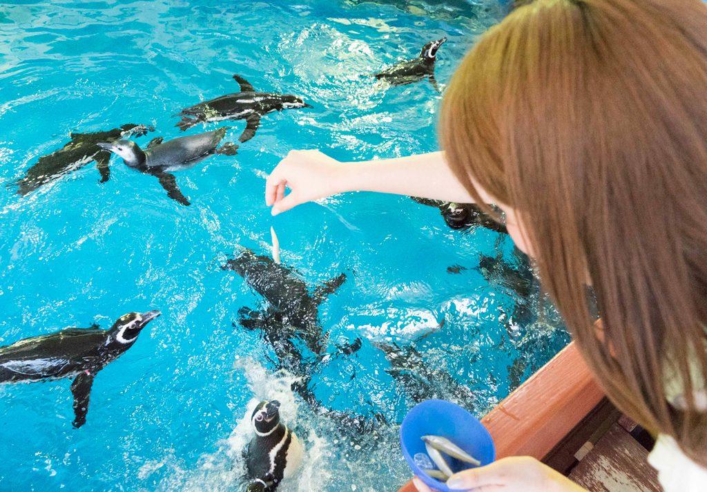 ペンギンにエサやり体験/須磨海浜水族園(兵庫県神戸市)