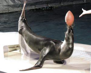 イルカとアシカのショーも見逃せない!「京急油壺マリンパーク」