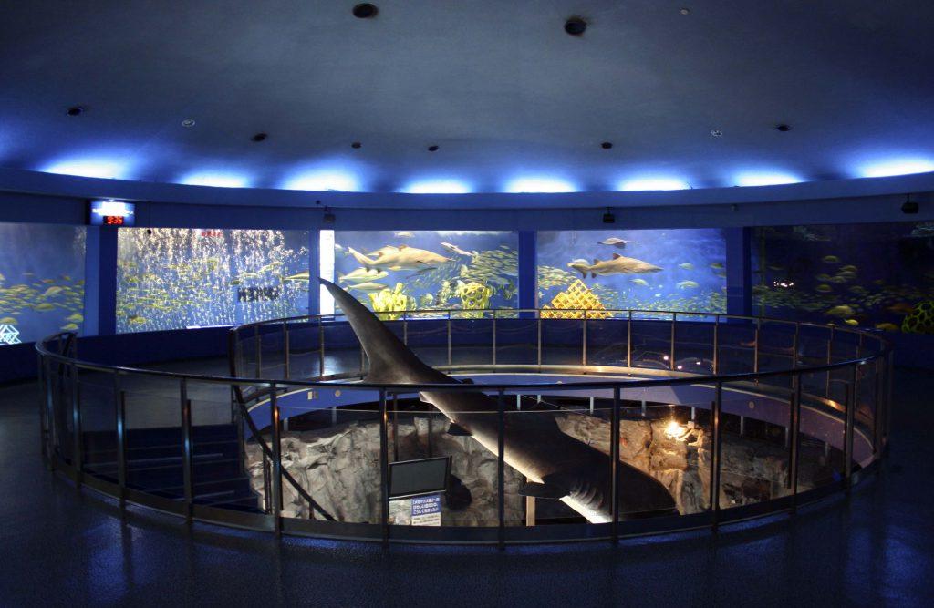 展示施設「魚の国」/京急油壺マリンパーク(神奈川県/三浦市)