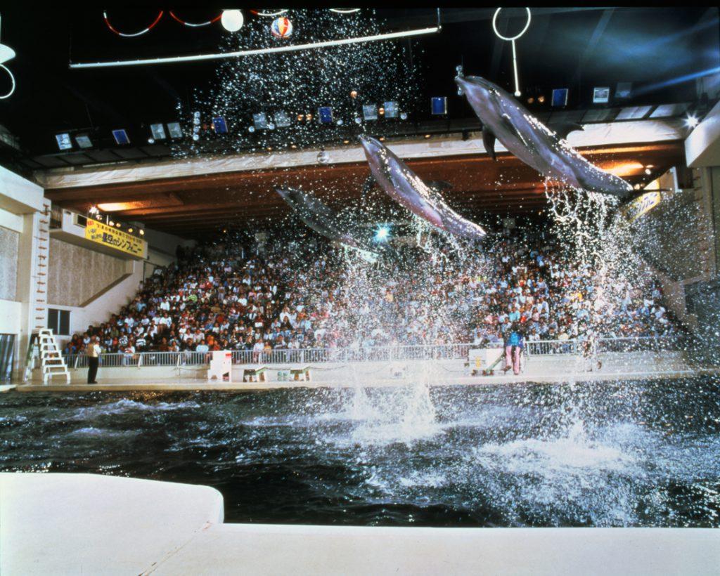 完全屋内の劇場型施設「ファンタジアム」で開催されるイルカのパフォーマンス/京急油壺マリンパーク(神奈川県/三浦市)