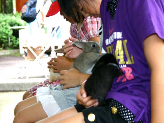 小動物を抱っこできる「こどもどうぶつえん」の様子/盛岡市動物公園(岩手県/盛岡市)