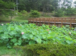 「四季菜苑」湿生植物園/万葉クリエートパーク(宮城県/大衡村)