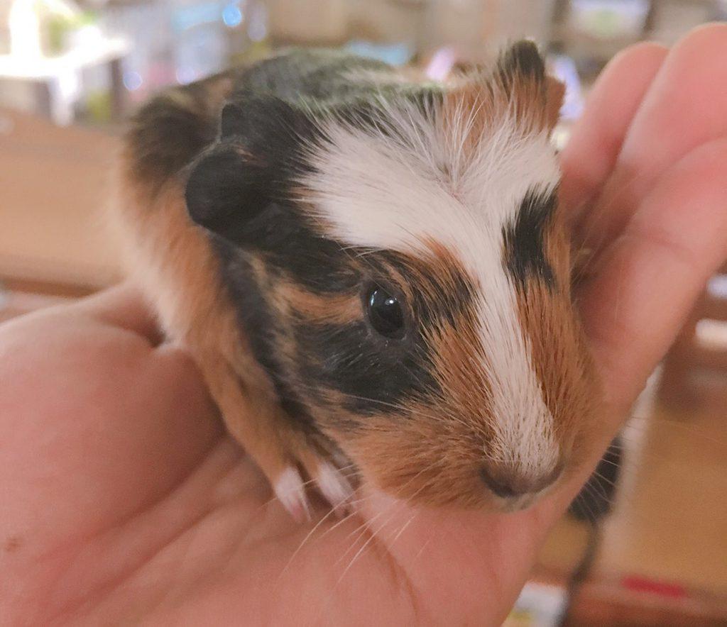 ふれあい動物園で小動物とふれあう様子/ピクニカ共和国(福岡県/飯塚市)