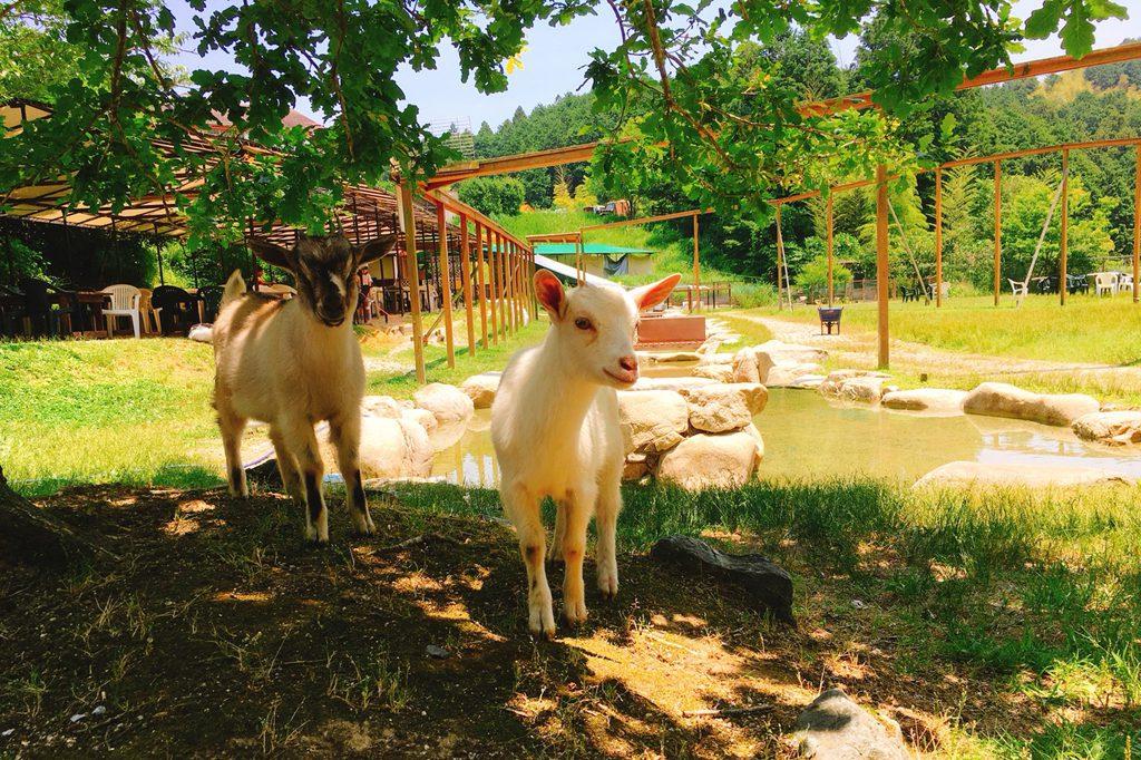 移動動物園などイベントも充実の様子/ピクニカ共和国(福岡県/飯塚市)