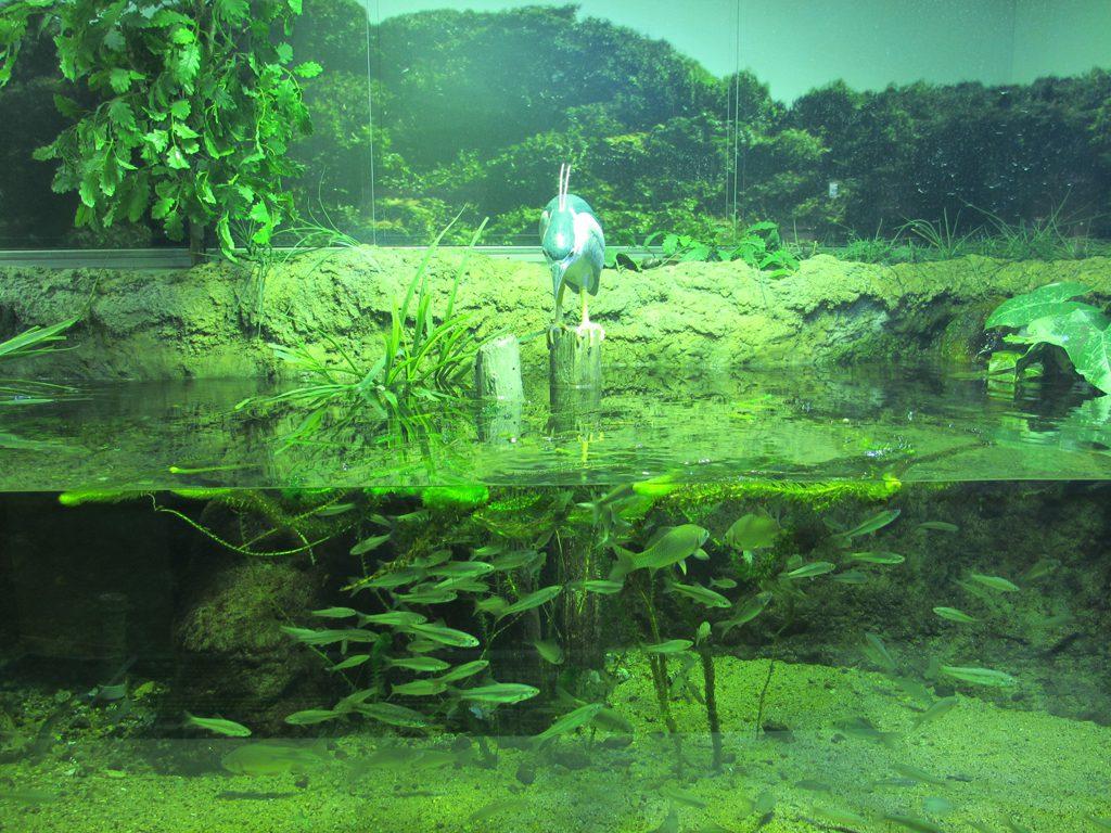播磨地方の里や海で見られる身近な生き物を展示/姫路市立水族館(兵庫県/姫路市)