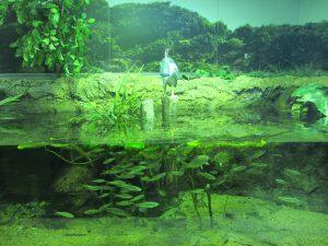 ペンギンも人気!姫路市立水族館は、タッチプールやハンズオンなど五感で体験しよう