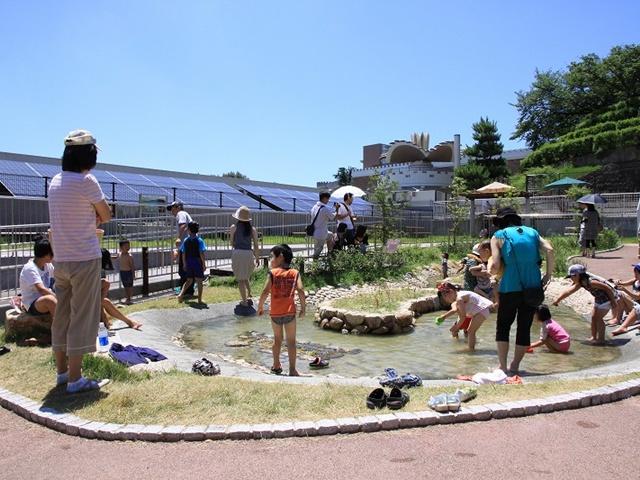播磨地方の自然の池を再現した屋上のビオトープ/姫路市立水族館(兵庫県/姫路市)