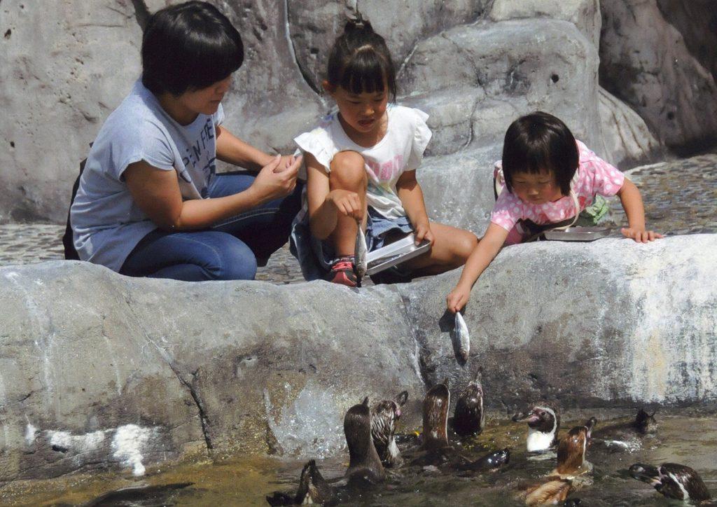 ペンギンのエサやり体験の様子/福山市立動物園(広島県/福山市)