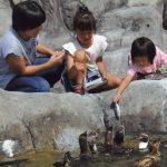 福山市立動物園は日本唯一のボルネオゾウが人気!猛獣などにえさやりも!
