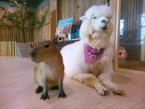 アルパカやカンガルーもいる!大阪の屋内型ふれあい動物園「天保山アニパ」