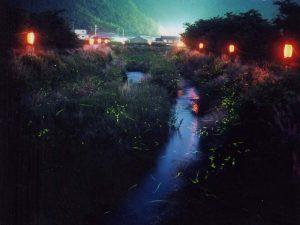 ホタル祭りも満載!関西(滋賀・京都・兵庫・奈良・和歌山)のホタル観賞スポット2019