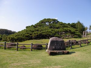 沖縄県のホタル観賞・ホタル祭り2019(久米島ホタル館は4~11月)