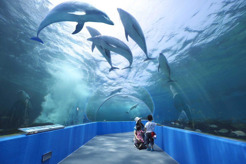 イルカたちの楽園ゾーンのトンネル水槽/のとじま水族館(石川県/七尾市)