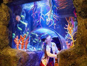 体験型水族館「シーライフ名古屋」の子どもがワクワクするポイントは?