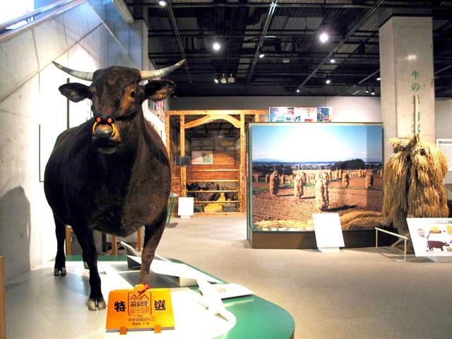前沢牛の剥製を展示/牛の博物館(岩手県/奥州市)