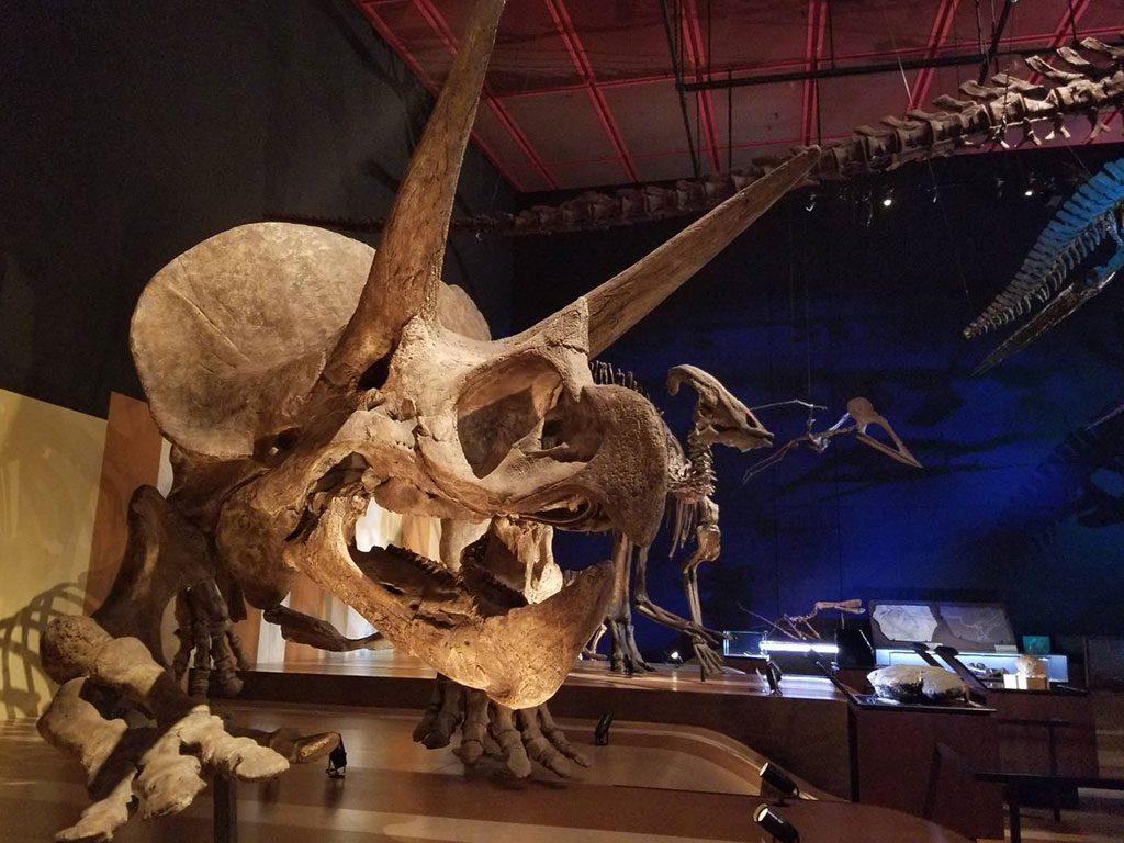 化石展示室の大迫力の恐竜骨格/いわき市石炭・化石館 ほるる(福島県)