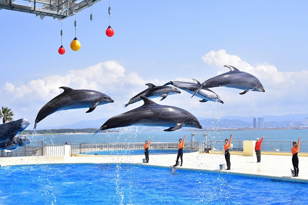 「イルカ・アシカショー」で見られるイルカのジャンプ/マリンワールド海の中道(福岡県)