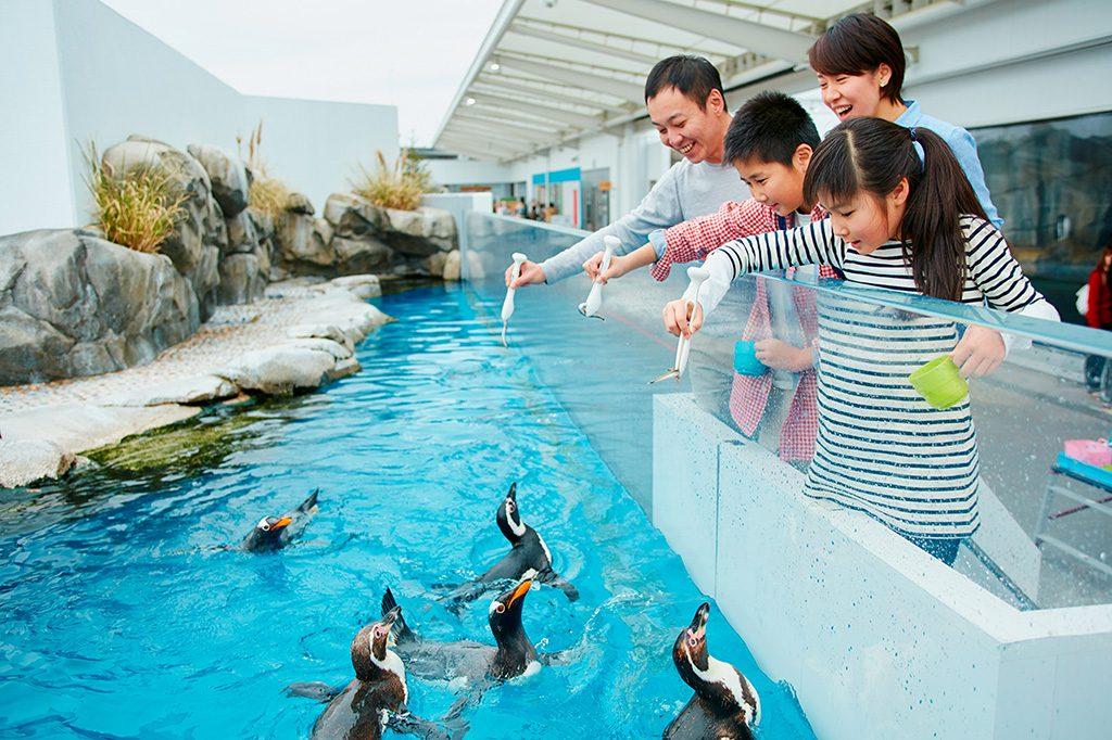 ペンギンフィーディングタイムの様子/仙台うみの杜水族館(宮城県/仙台市)