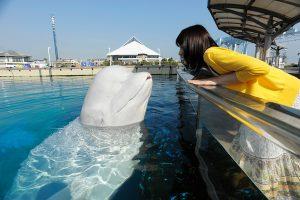 関東のおすすめ水族館26選!子どもに人気の大型水族館が満載