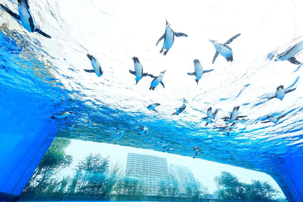 【東京都】の水族館…9件はこちら/サンシャイン水族館の「天空のペンギン」(東京都/豊島区)