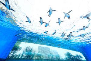 東京都のおすすめ水族館9選!見逃せないショーやアイドルは?