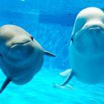 中国地方のおすすめ水族館9選!シロイルカ・スナメリ・ペンギンが人気