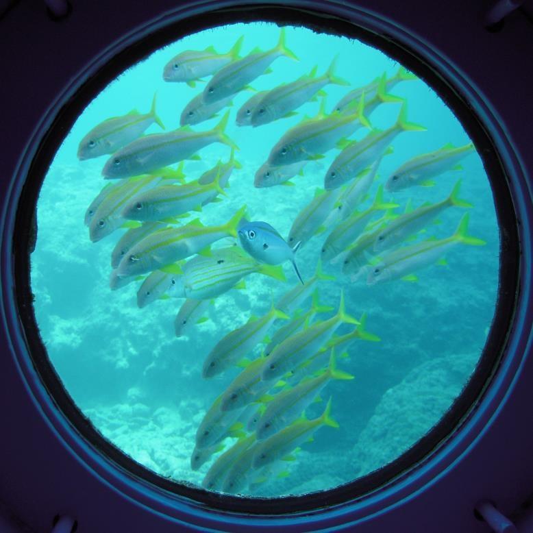 丸窓から魚たちを観察できる/ブセナ海中公園 海中展望塔・グラス底ボート(沖縄県/名護市)