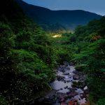 ホタル祭りも!九州(佐賀・大分・鹿児島…)のホタル観賞スポット