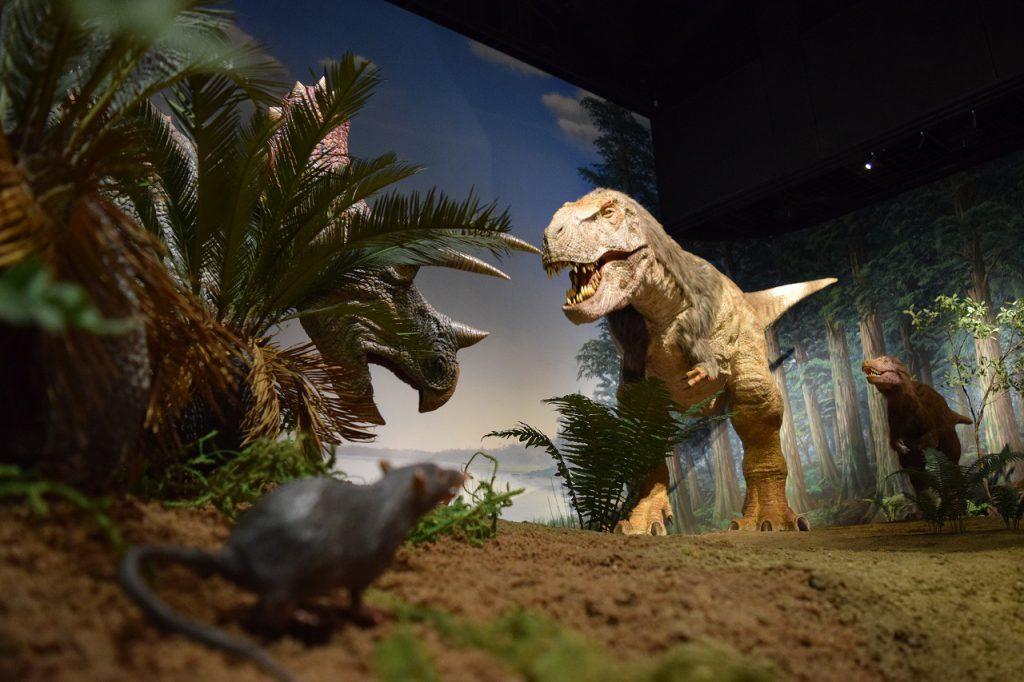 動く恐竜の展示:ティラノサウルス/ミュージアムパーク茨城県自然博物館(坂東市)