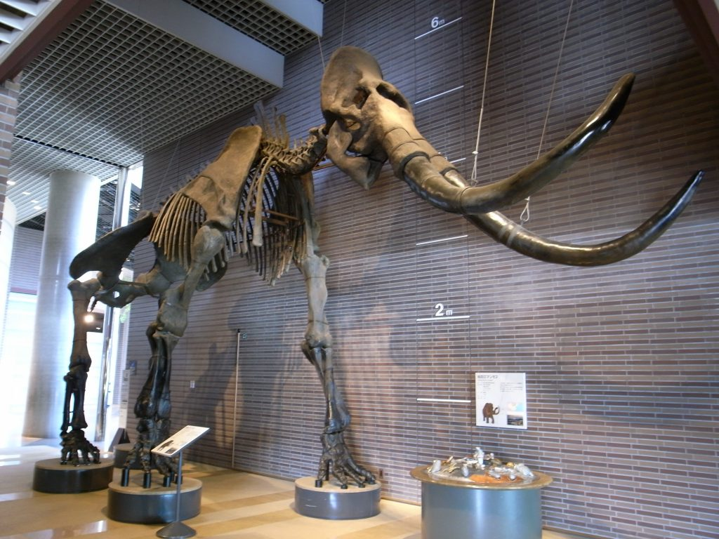 松花江マンモスの骨格標本/ミュージアムパーク茨城県自然博物館(坂東市)