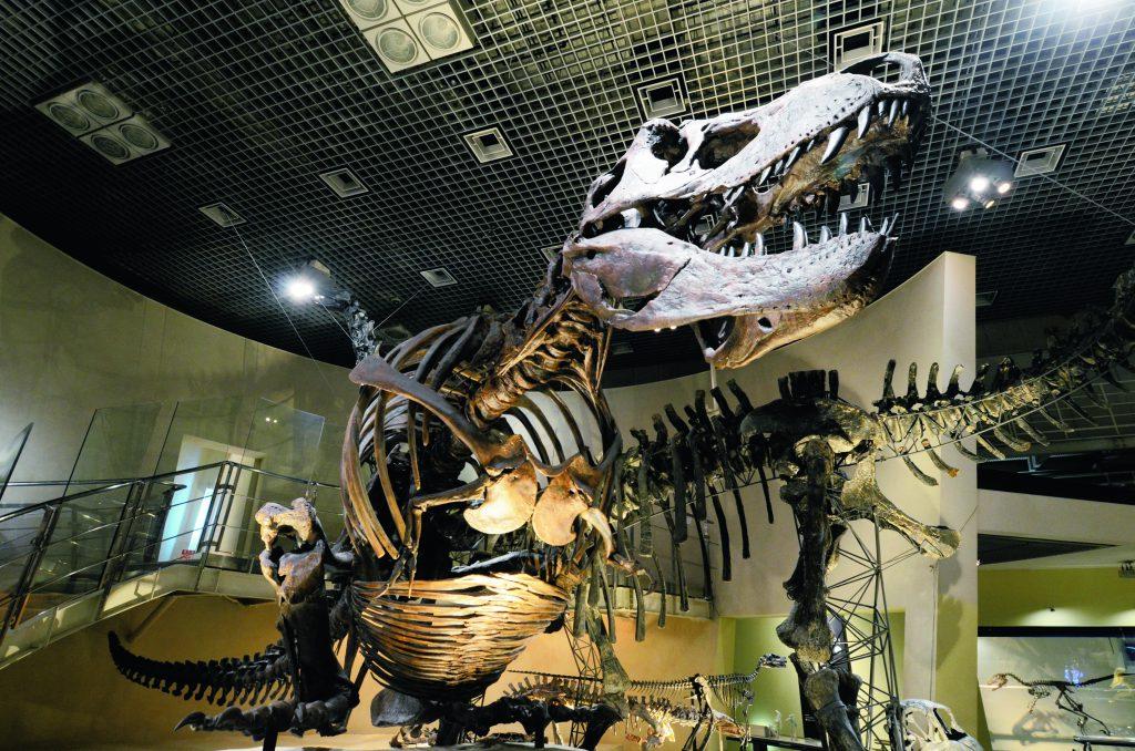 ティラノサウルスやトリケラトプスなどの全身骨格/国立科学博物館(東京都/台東区)