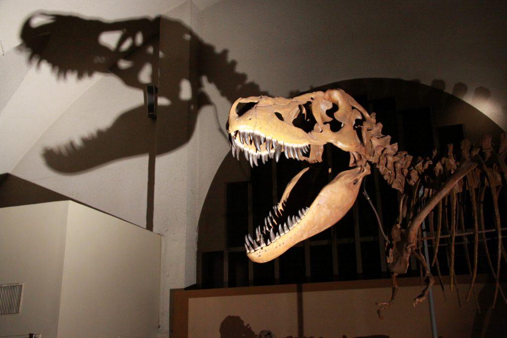恐竜ナイトツアーの様子/東海大学海洋科学博物館・自然史博物館(静岡県/静岡市)