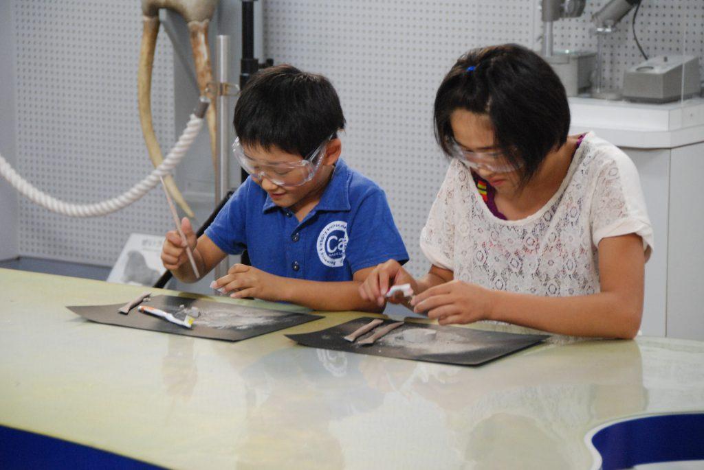 化石クリーニング体験の様子/東海大学海洋科学博物館・自然史博物館(静岡県/静岡市)