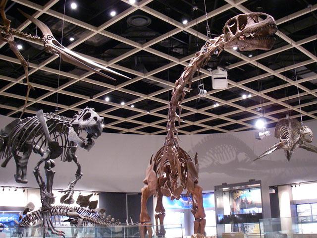 中生代恐竜の骨格標本/豊橋市自然史博物館(愛知県)