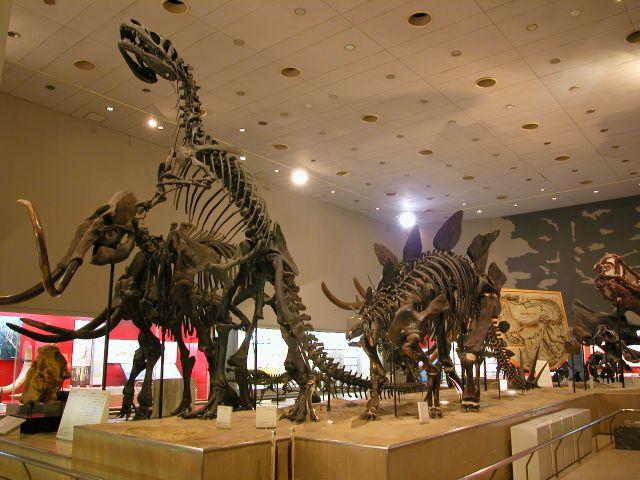 マンモス、アロサウルス、ステゴサウルスの骨格標本/大阪市立自然史博物館